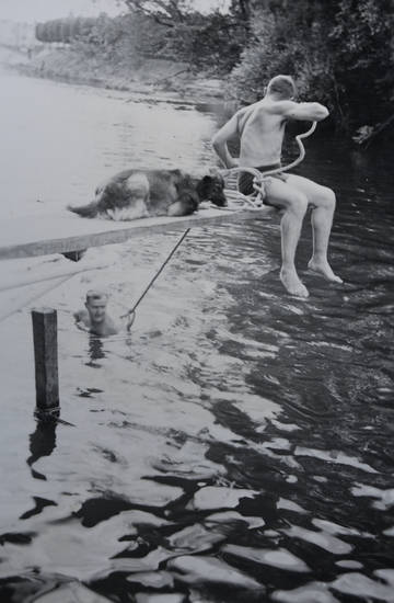 baden, fluss, hund, krieg, Sommer, sprungbrett, wasser, zweiter weltkrieg