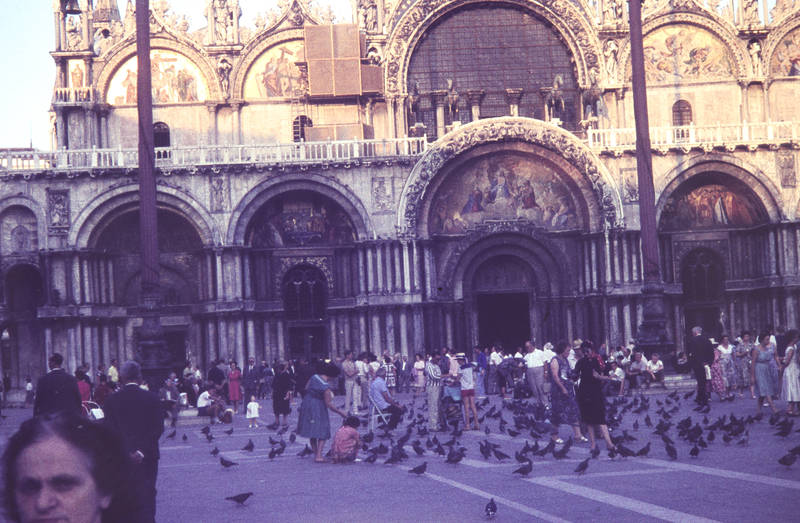 Italien, vogel