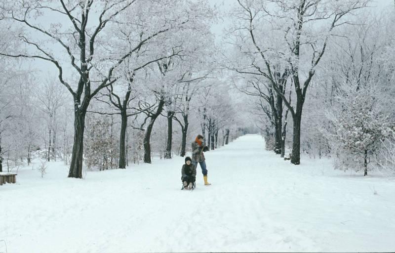 allee, Alleestraße, Gummistiefel, kinder, schlitten, schnee, spaziergang, winter, Winterlandschaft