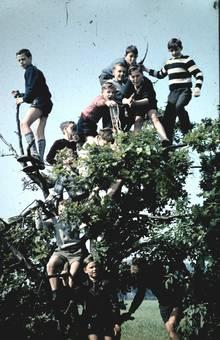 Baum-Erklimmer