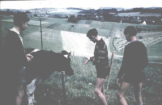 """""""Wir Rinder """""""