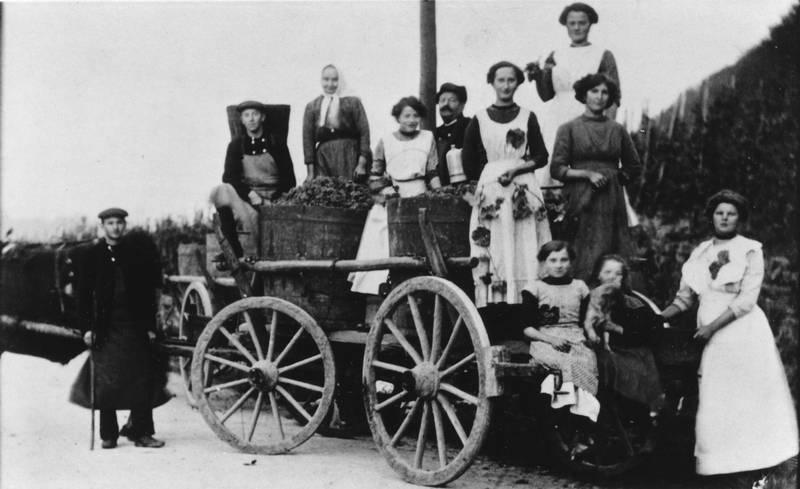 1913, Frauen, fuhrwerk, Trauben, Weinberg, Weinlese