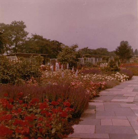 Blume, köln, Rheinpark