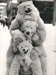 Drei Eisbären und ein Hund