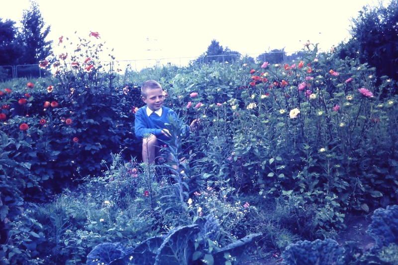 Blume, garten, Wanne-Eickel