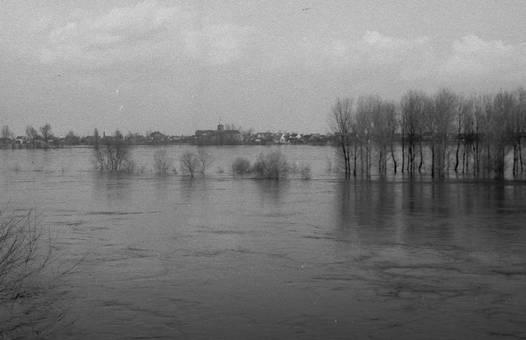 Hochwasser im Rhein bei Uedorf