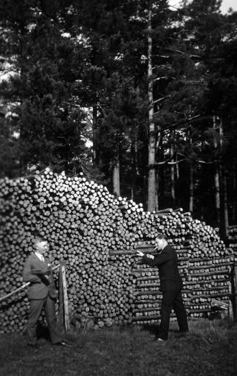 holz, Holzstapel, Pfosten, stapel, wald