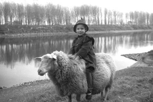 Hilla reitet auf dem Schaf