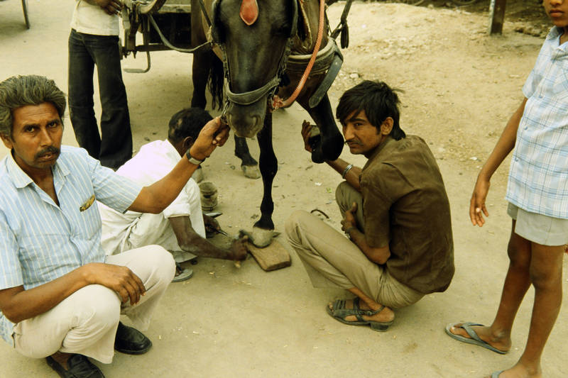 asien, huf, inder, indien, Jaipur, Pferd