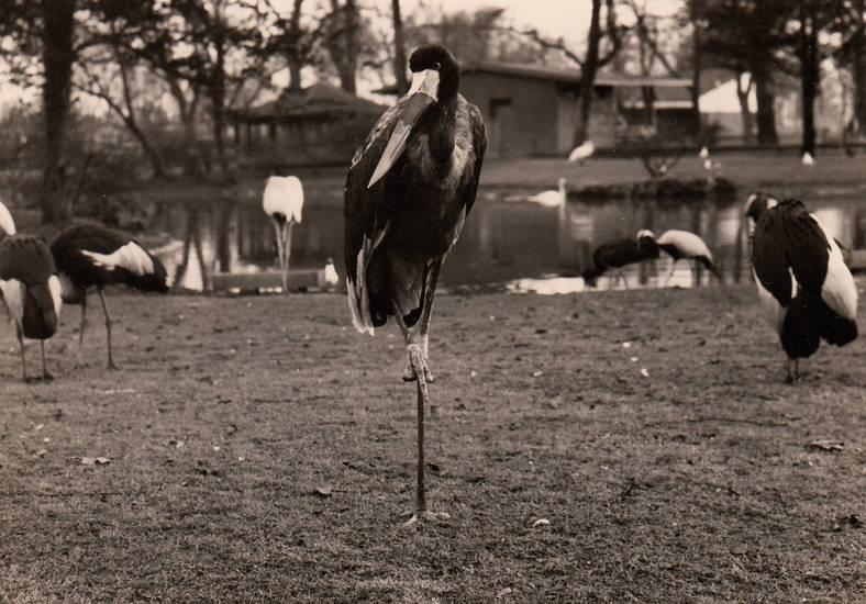 köln, Kölner Zoo, vogel, Zoo