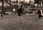 Im Kölner Zoo 1963