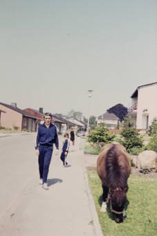 Pony im Vorgarten