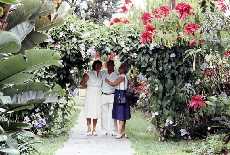 bananenpflanze, Blume, ferien, Gehweg, mode, pflanze, reise, spaziergang, urlaub