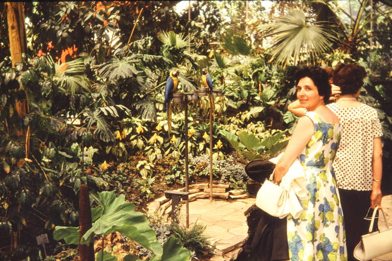 Gartenschau, Gewächshaus, iga, Internationale gartenschau, kleid, mode, Papagei, pflanze, Tropenhaus, vogel
