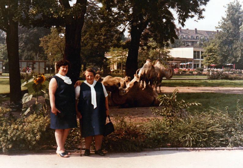 ausflug, kamel, köln, Kölner Zoo, mode, sonnenblume, Zoo