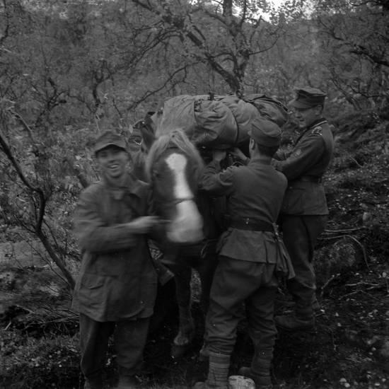 2. Weltkrieg, Gepäck, Pferd, Russland, soldat, tundra, Uniform, zweiter weltkrieg