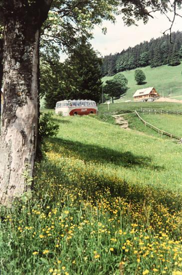 ausflug, baum, Blume, bus, haus, schwarzwald, Sommer, urlaub