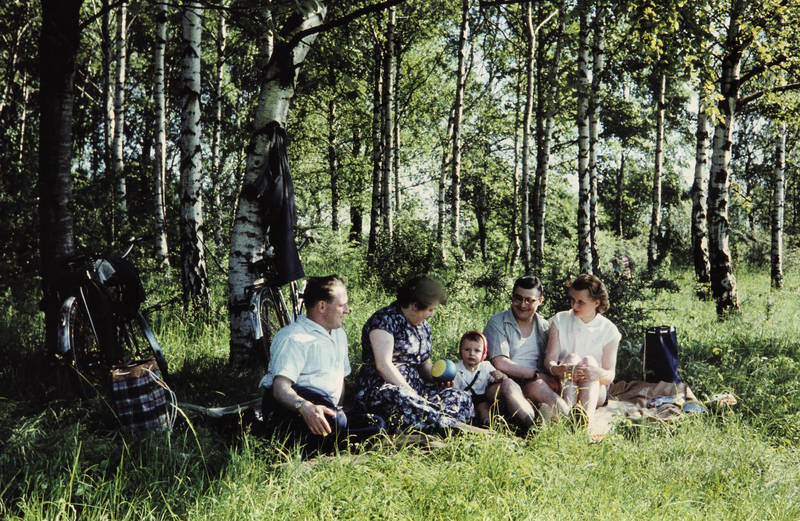 ausflug, birke, familie, freizeit, picknick, Spaß