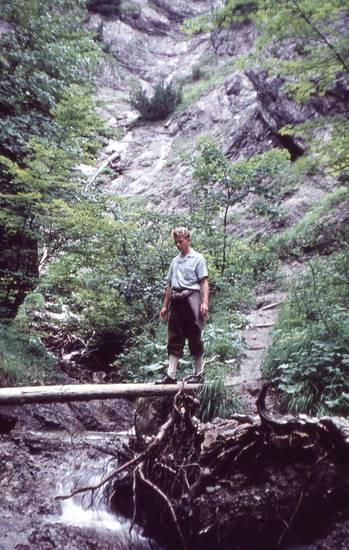 ausflug, Bach, Baumstamm, Stamm, urlaub, Wanderung