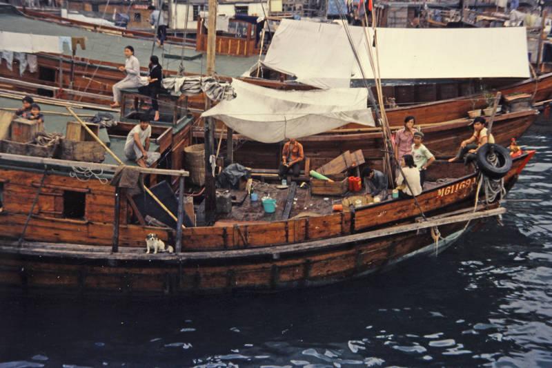boot, Hafen, hund, reise, schiff, urlaub