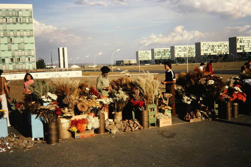 Blume, Brasilien, Eixo Monumental, gebäude, markt, reise, urlaub, Verkaufsstand