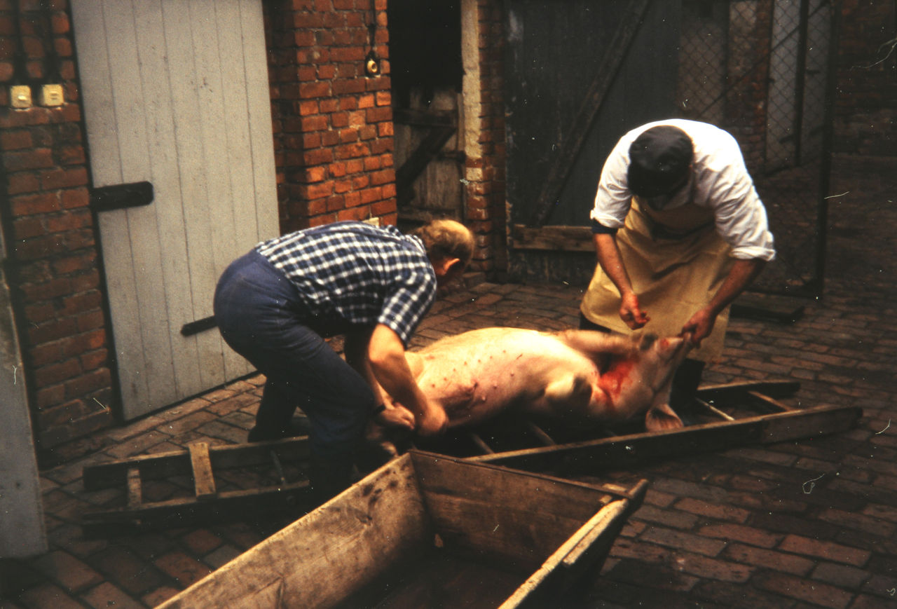 Schlachtung eines Schweins - WDR Digit