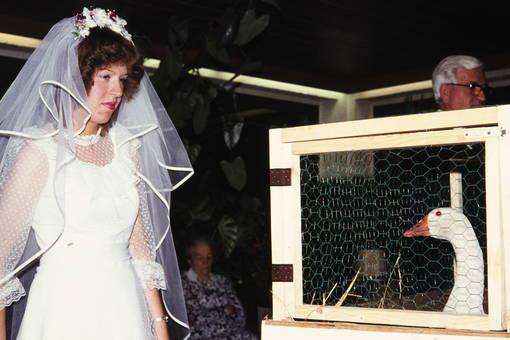 Gans zur Hochzeit