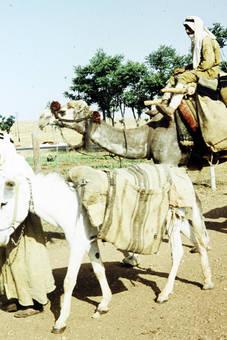 Esel und Kamel
