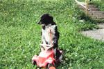 Ein Hund fährt Bobbycar