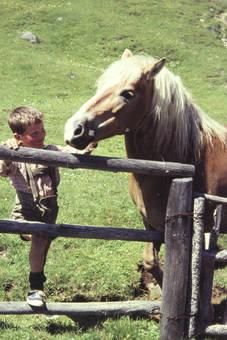 Junge streichelt Pony