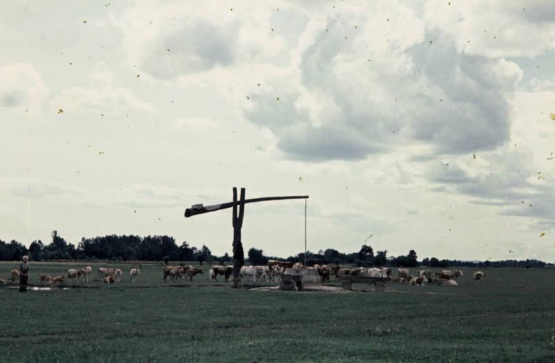 Brunnen, Grasen, Kuh, Kühe, Sitzbank, wasser