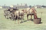 Karren mit Pferden