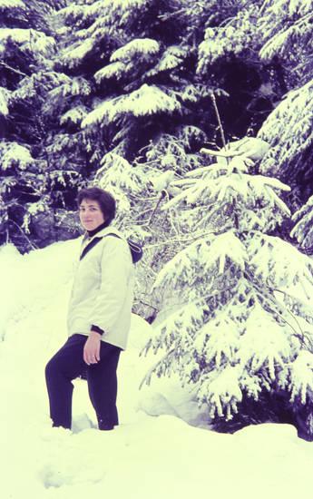 schnee, spaziergang, Tannenbaum, winter