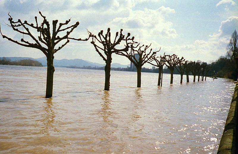 Hochwasser, Langer Eugen, Naturkatastrophe, Rheinufer, überschwemmung