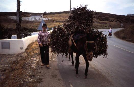 Transport mit Esel