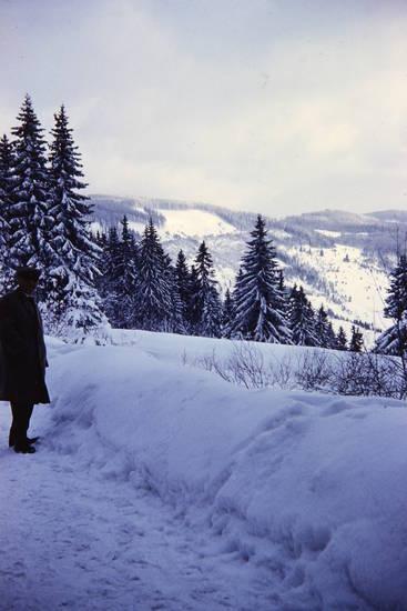 Aussicht, schnee, schwarzwald, Sonne, Tanne, winter