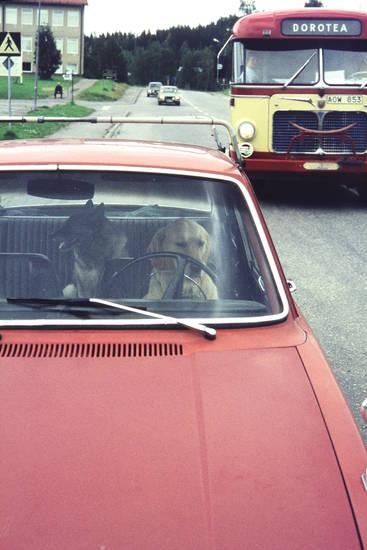 auto, bus, dorotea, haustier, hund, hund am steuer, KFZ, lenkrad, PKW, Schweden, steuer