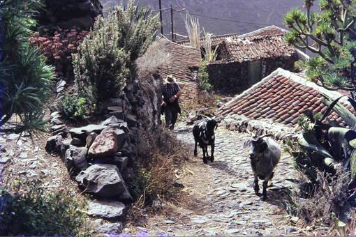 Weg der Ziegen