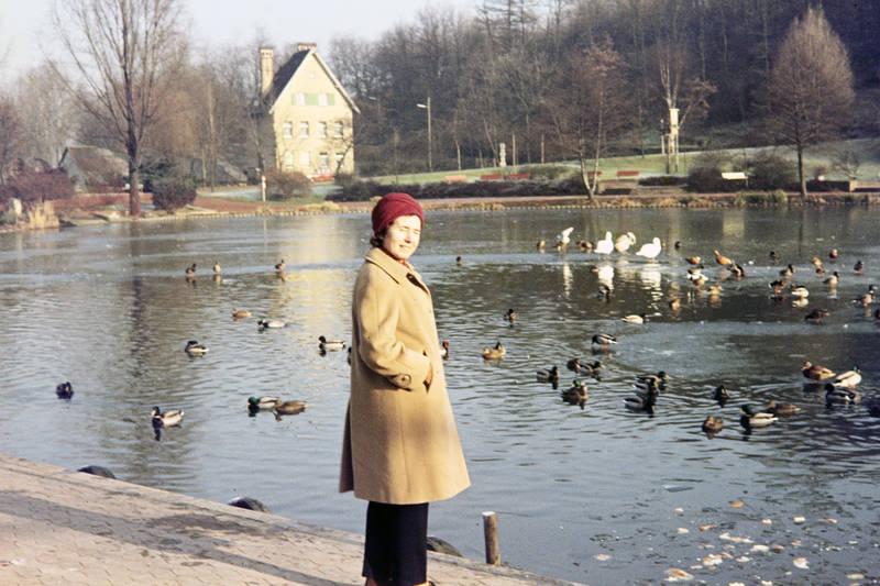 Deutsch-Französischer-Garten, Ente, gewässer, mantel, mütze, see, tier, vogel