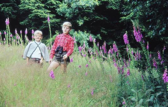 Auf einer Blumenwiese