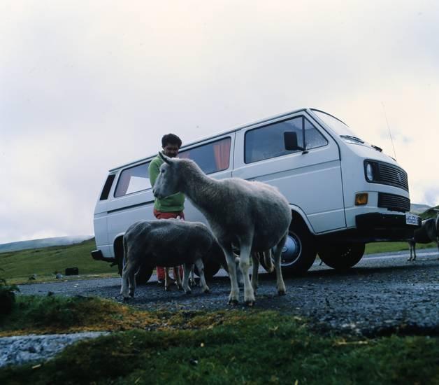 reise, schaf, T3, urlaub, Urlaubsreise, volkswagen, vw, vw bus, VW-Bulli