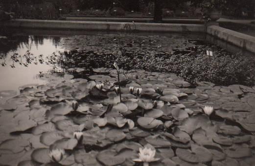 In der Flora 1932