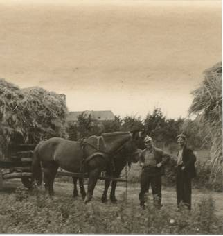 Pferdegespann mit Getreide.