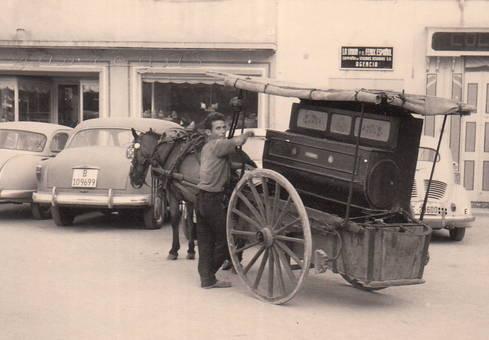 Pferd und Auto