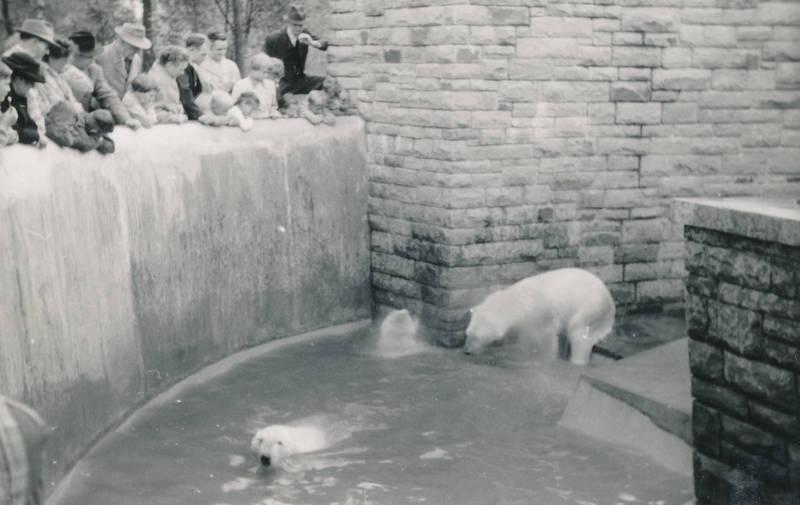 ausflug, eisbär, kind, Kindheit, tier, Zoo, Zoobesuch