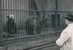 Im Tierpark