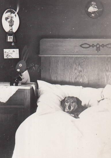 bett, haustier, hund, Kalender, osterhase, Ostern, Schlafzimmer