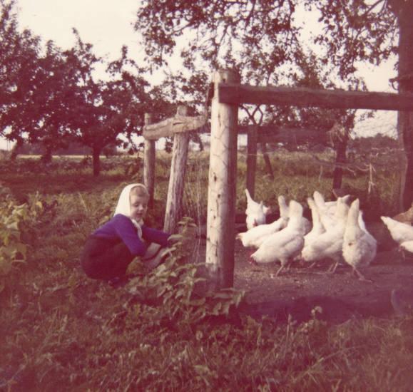 garten, gehege, Huhn, hühner, kind, Kindheit
