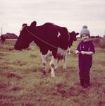 Kuh an einer Leine