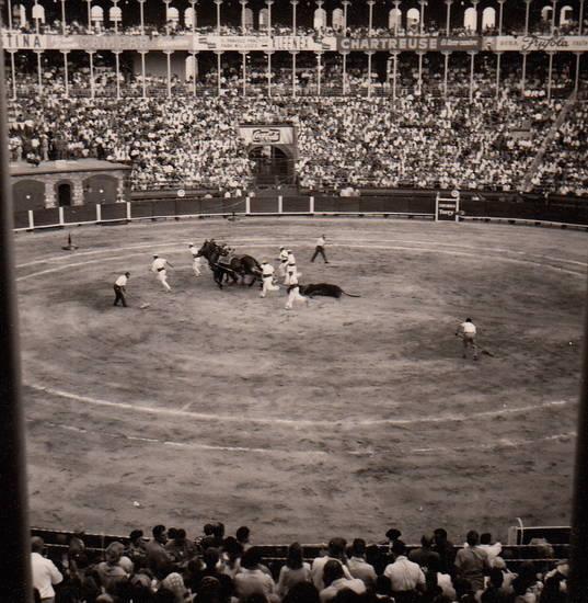 arena, Pferd, Spanien, Stier, stierkampf, Stierkampfarena, Torero